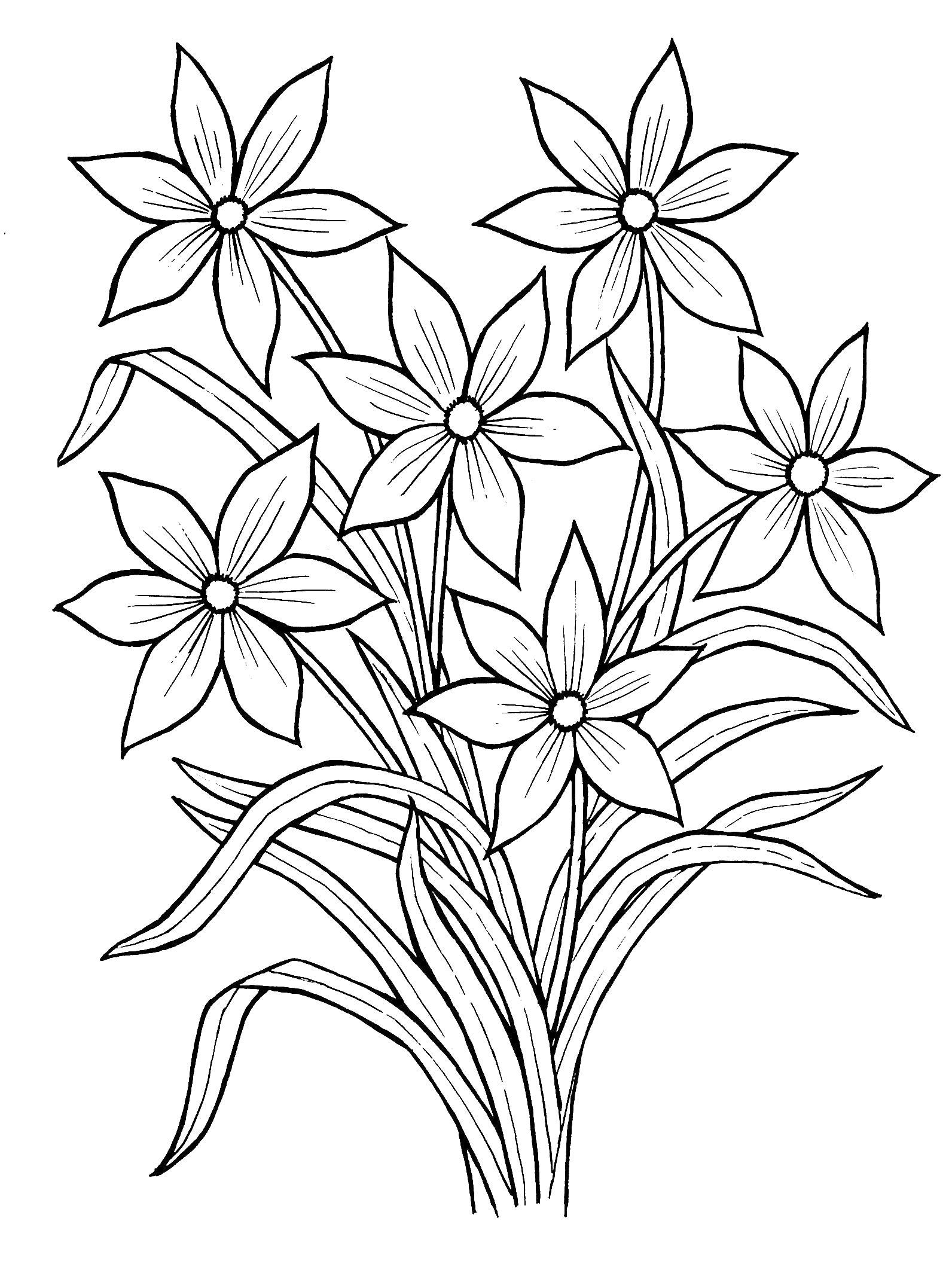 картинки раскраски цветы