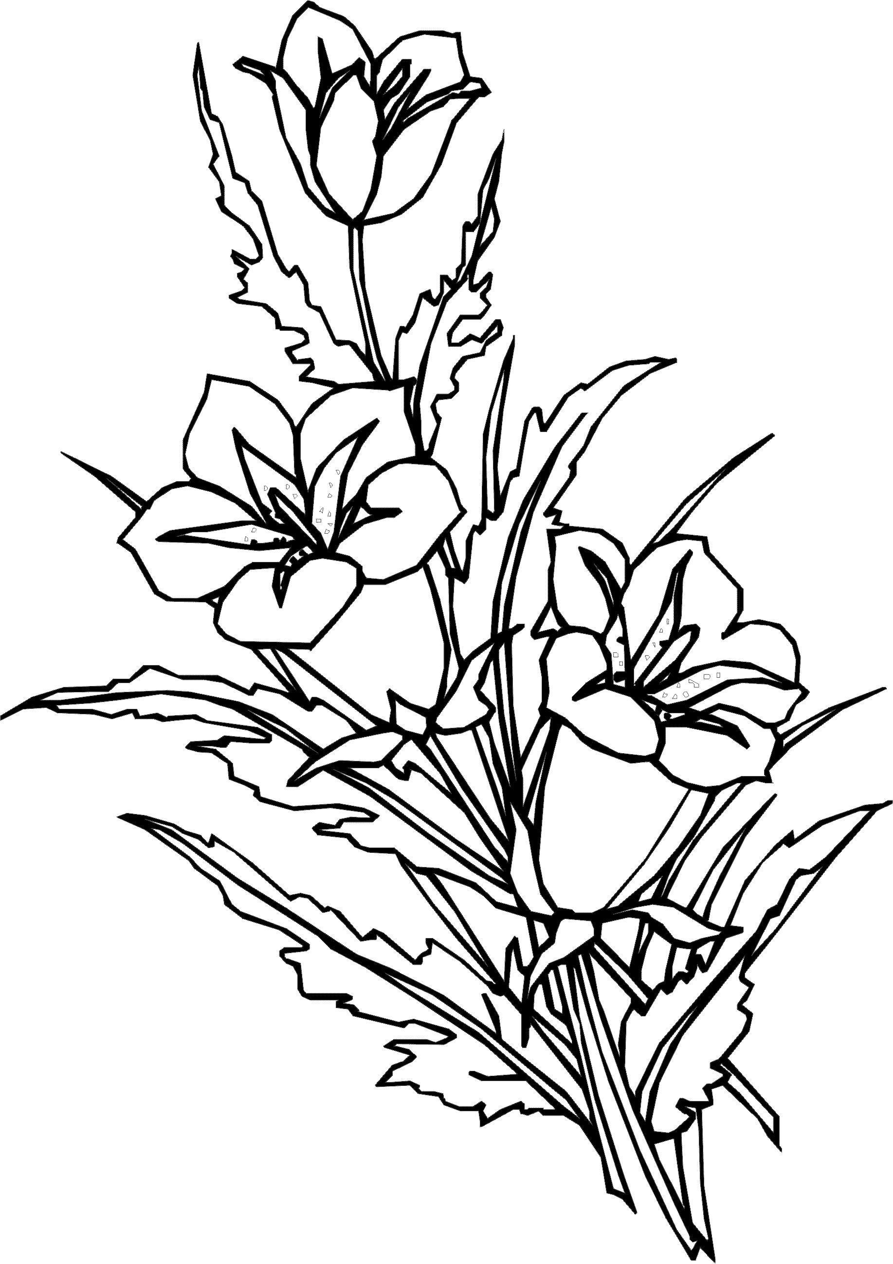 Разукрашки цветов