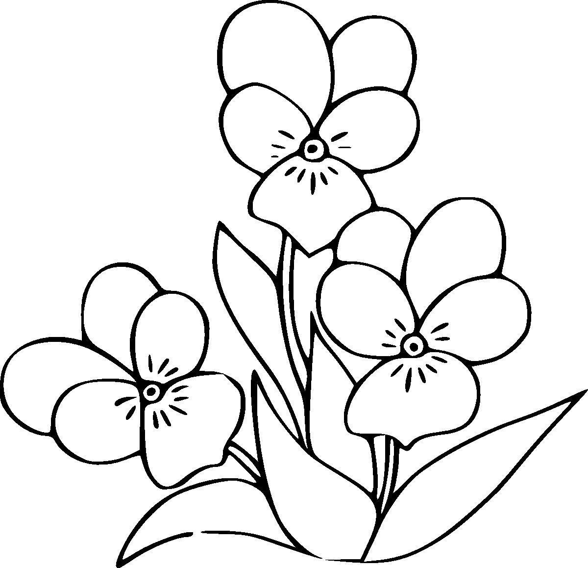 Цветы анютины глазки, виола Раскраски цветы скачать
