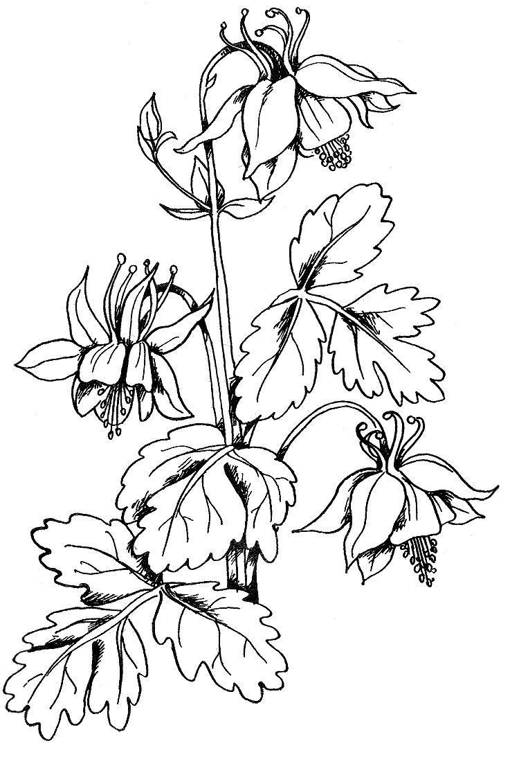 Колокольчик раскраска цветок