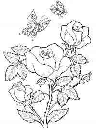 Куст розы над которым летают бабочки Раскраски с цветами распечатать бесплатно