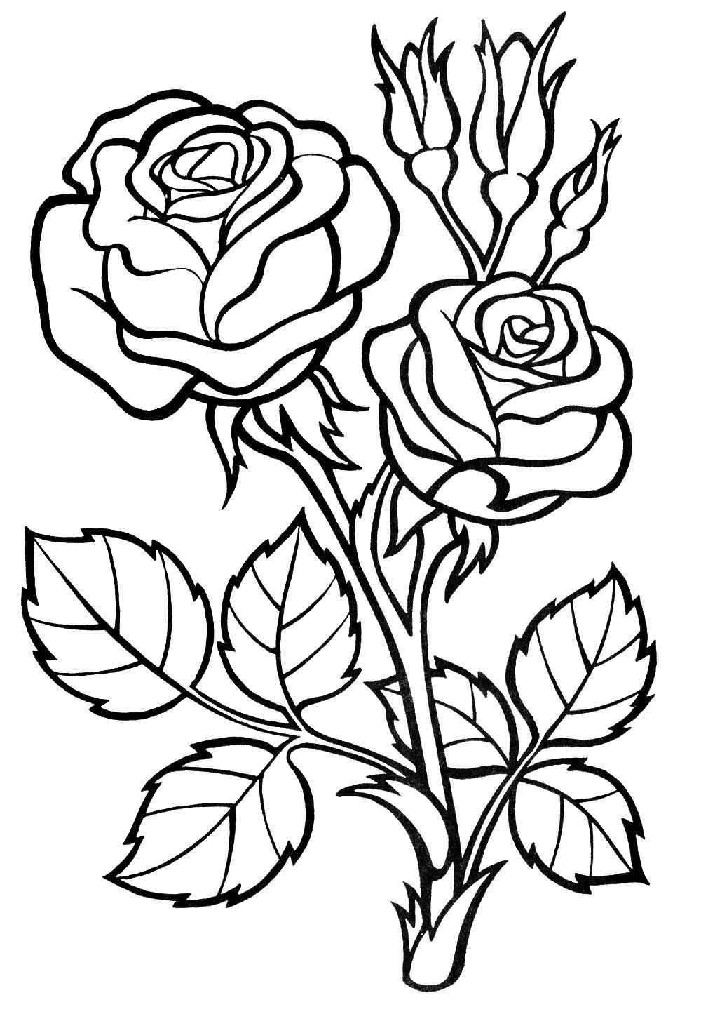 Красивый куст розы