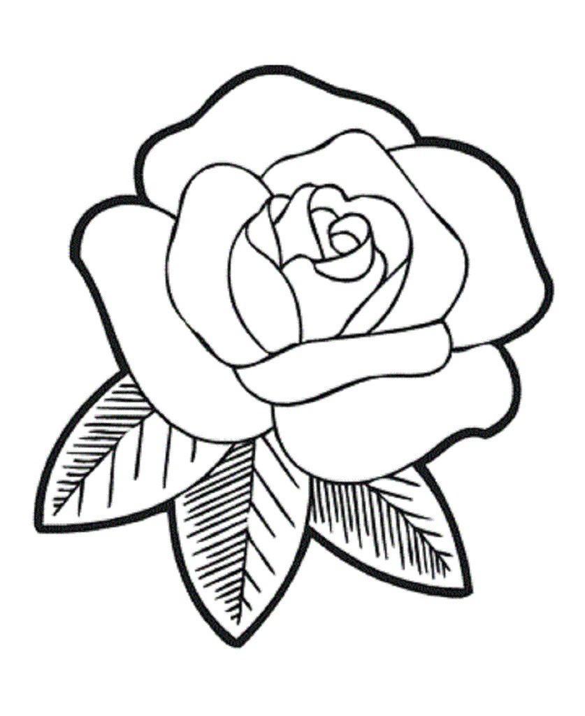 Раскраски цветка роза
