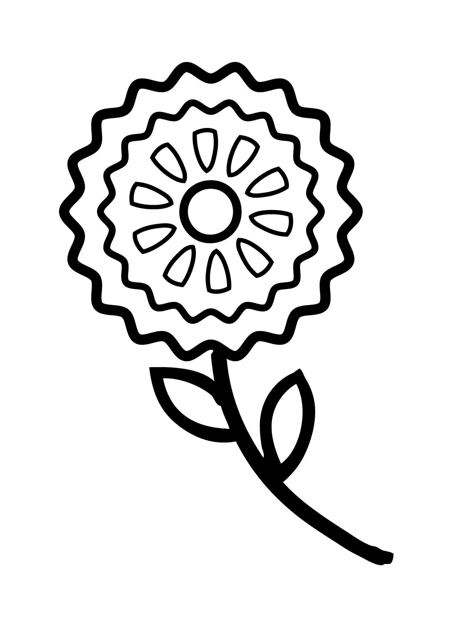 Василек  с длинным стеблем Раскраски с цветами распечатать бесплатно