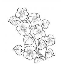 Цветы полевые Раскраски цветов бесплатно