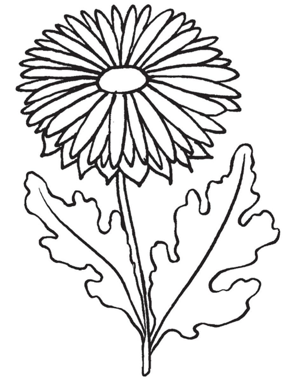 Один цветок Астра Раскраски цветов скачатьраскраски цветы