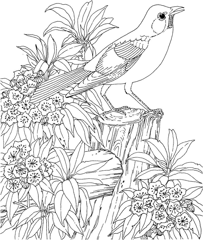 Птица на пне в цветах Раскраски с цветами распечатать бесплатно