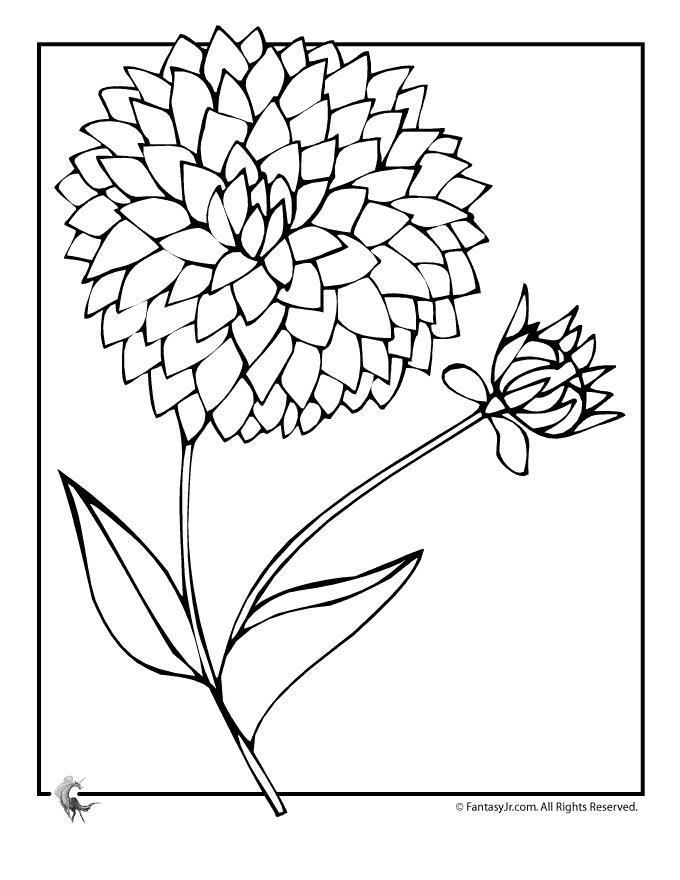 Большой георгин Фото раскраски цветы