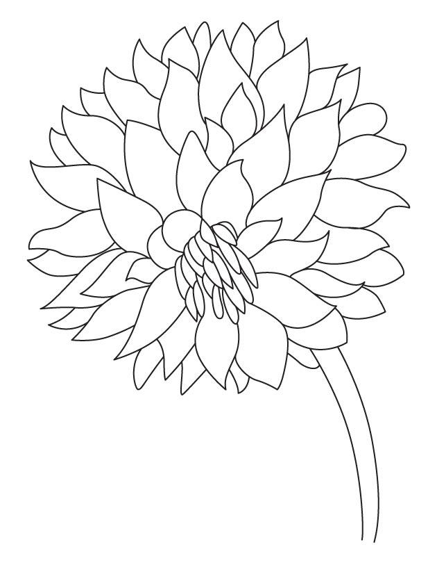 Садовый георгин Фото раскраски цветы