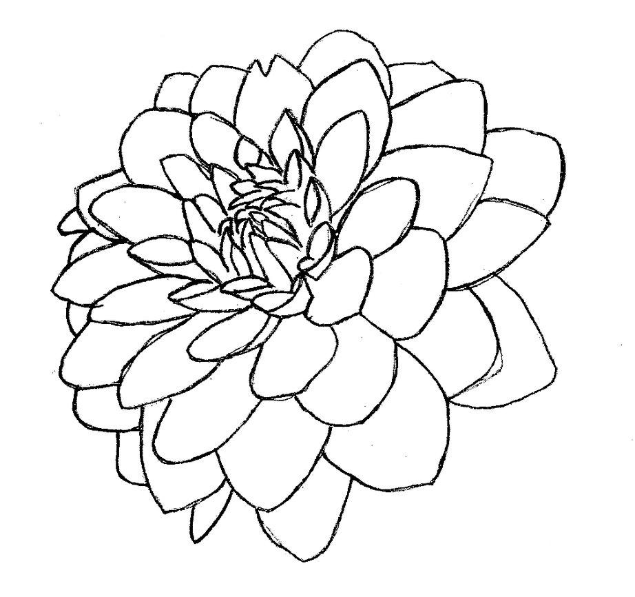 Цветок георгина Фото раскраски цветы