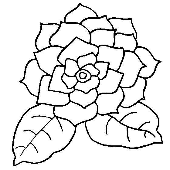 Гардения Раскраски цветы скачать