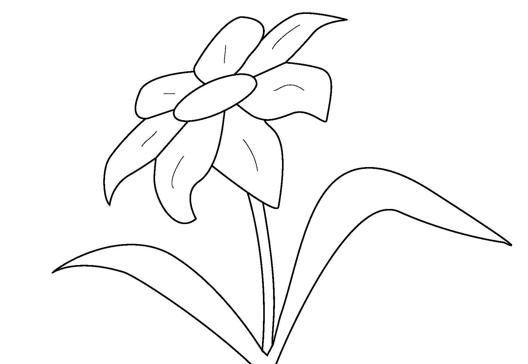 Цветок раскраска Раскраски с цветами распечатать бесплатно