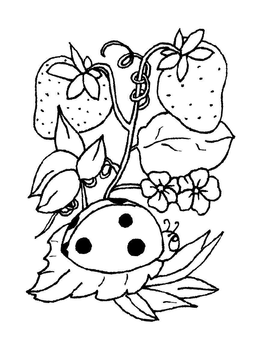 Земляника,  цветочки,  божья коровка Раскраски с цветами распечатать бесплатно