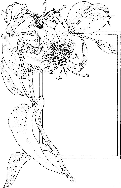Лилия открытка с лилией Раскраски с цветами распечатать бесплатно
