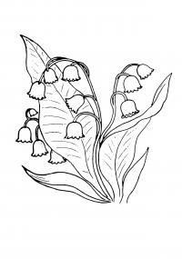 Ландыш Раскраски цветы для детей