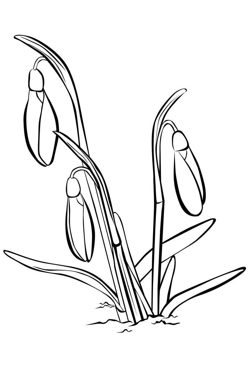 Весенние цветы подснежники Красивые раскраски цветов