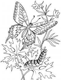 Бабочка и гусеница на цветке Раскраски с цветами распечатать бесплатно