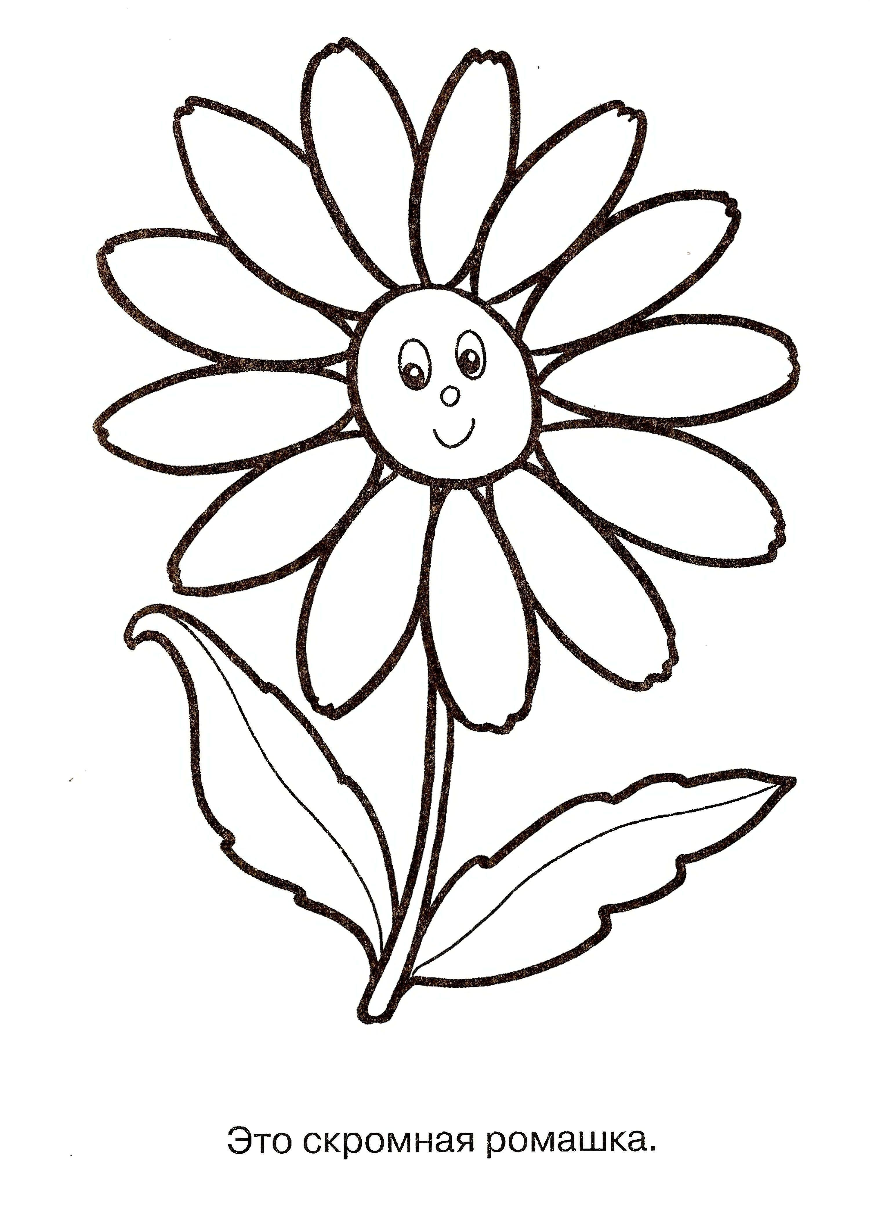 Один цветок Большая ромашка улыбается. это скромная ромашка Раскраски цветы хорошего качествараскраски цветы