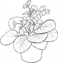 Фиалка <u>цветок с горшком для раскрасок</u> Раскраски с цветами распечатать бесплатно
