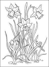 Нарцисс и улитка на листе Раскраски с цветами распечатать бесплатно
