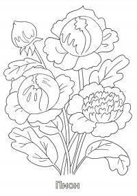 Пион Раскраски детские с цветами