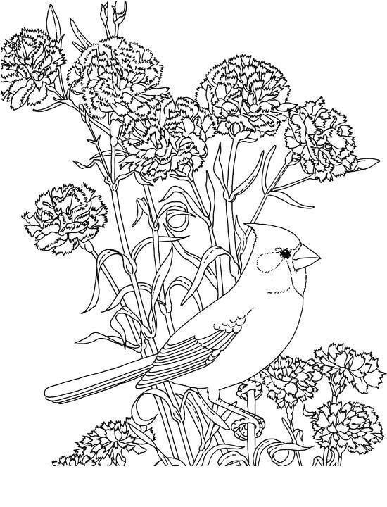 Гвоздика с птицей Раскраски с цветами распечатать бесплатно