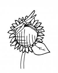 Подсолнух и стрекоза Раскраски с цветами распечатать бесплатно