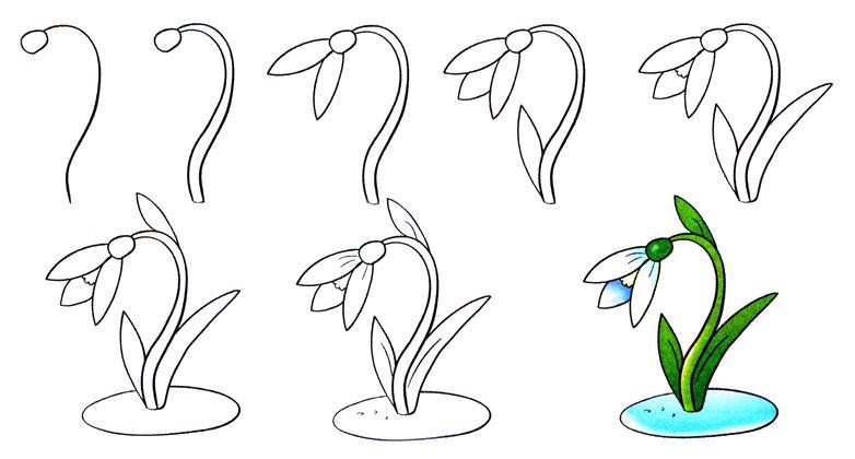 Подснежник с образцом, как нарисовать подснежник Красивые раскраски цветов