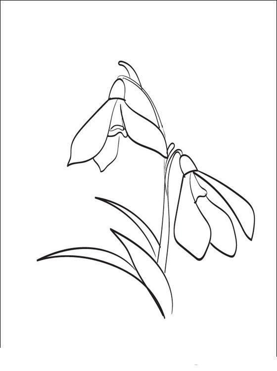 Подснежник Красивые раскраски цветов