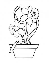 Нарциссы в горшке Раскраски с цветами распечатать бесплатно