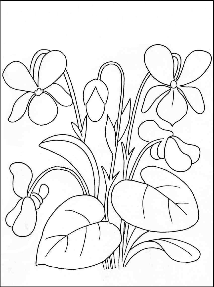 Весенние полевые цветы Раскраски цветов бесплатно