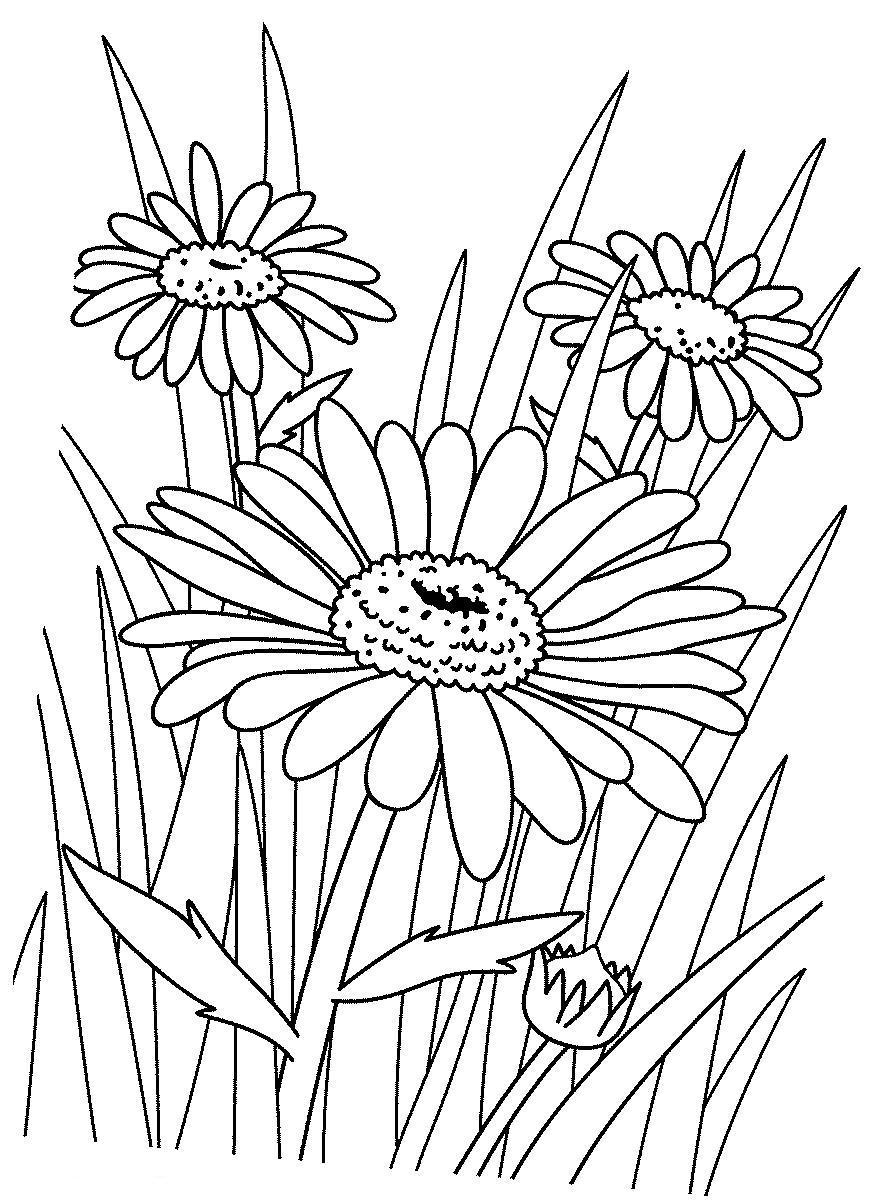 Полевые цветы Ромашки в поле. скачать раскраски цветы Для детей онлайн раскраски с цветамираскраски цветы