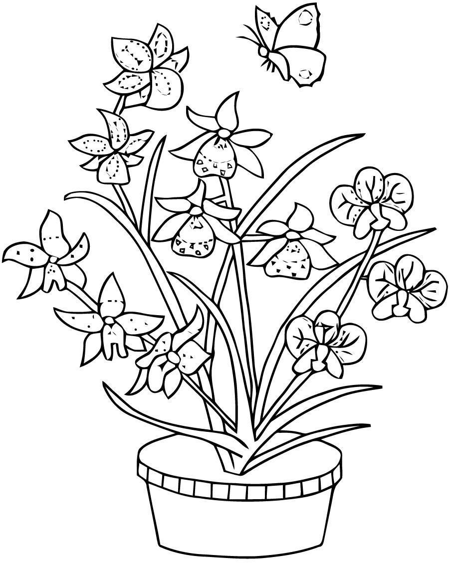 Раскраски раскрась цветы, бабочка, раскрасить цветы в горшке