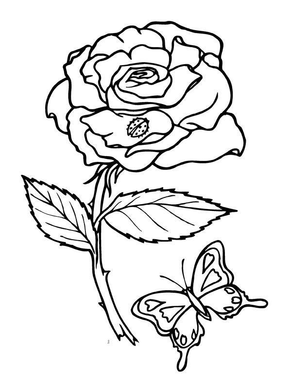 Бабочка Роза Раскраски цветы хорошего качествараскраски цветы