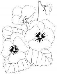 Раскраска для детей. анютины глазки Раскраски с цветами распечатать бесплатно