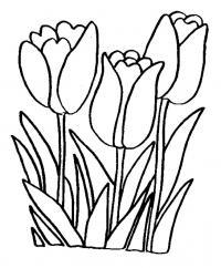 Тюльпан Фото раскраски цветы