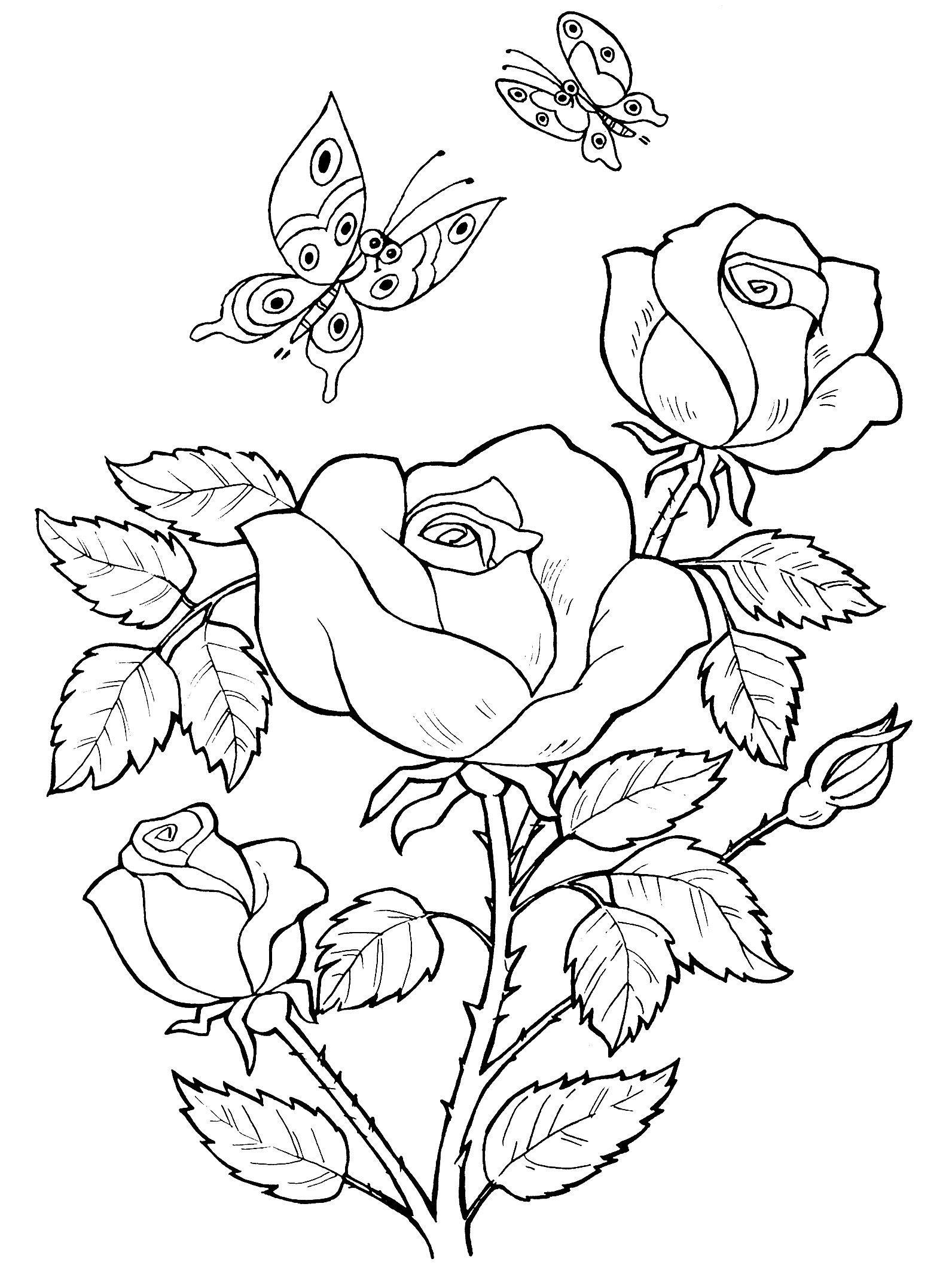 Две бабочки летают над кустом роз Раскраски с цветами распечатать бесплатно