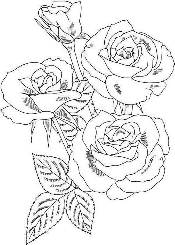 Три розы с шипами на ветке Раскраска цветок для скачивания