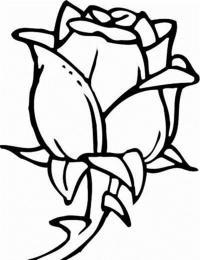 Бутон розы Раскраска цветок для скачивания