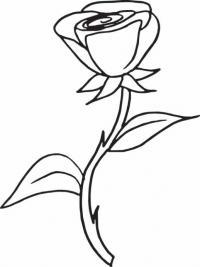 Роза с шипами Раскраска цветок для скачивания