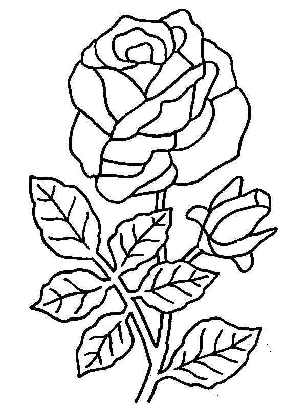 Роза с бутоном Раскраска цветок для скачивания