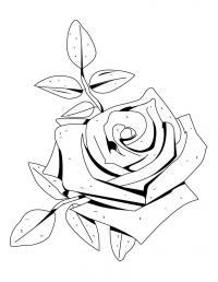 Красивая роза Раскраска цветок для скачивания