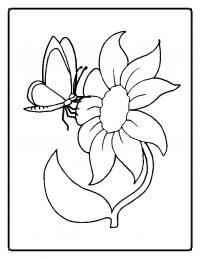 Бабочка на цветке цветы раскраски онлайн бесплатно