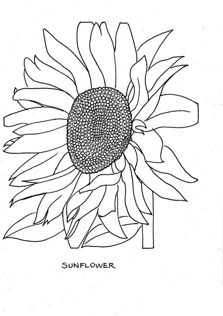 Один цветок Подсолнух Найти раскраски цветовраскраски цветы