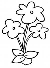 Простые цветочки цветы раскраски онлайн бесплатно