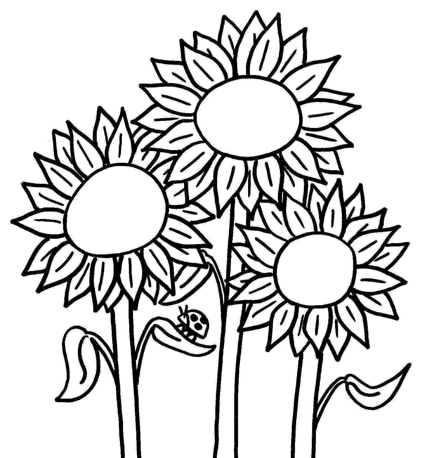 Подсолнух и божья коровка Раскраски с цветами распечатать бесплатно