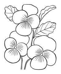 Виола Раскраски цветы скачать