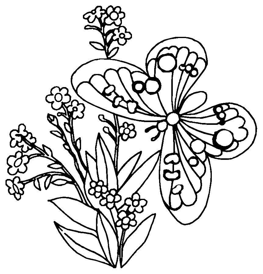Полевые цветы и бабочка Раскраски цветы для детей