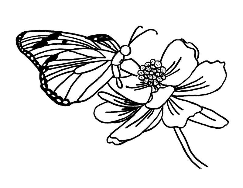 Бабочка на цветке Раскраски цветы для детей