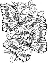 Бабочки на цветах Раскраски цветы для детей